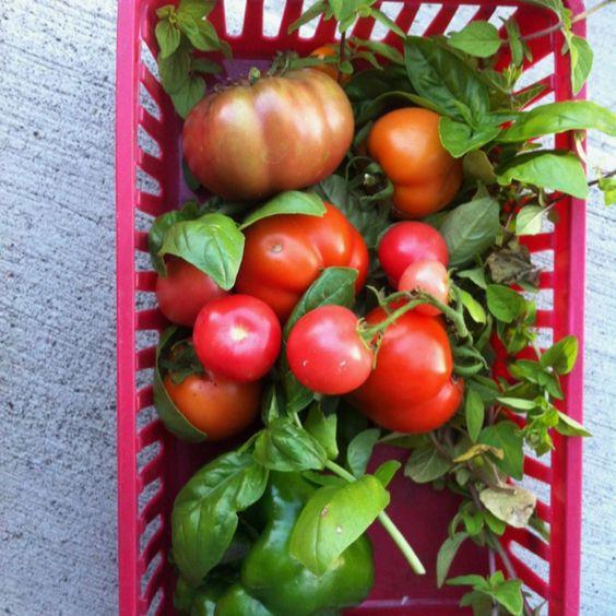 My garden stuff :)