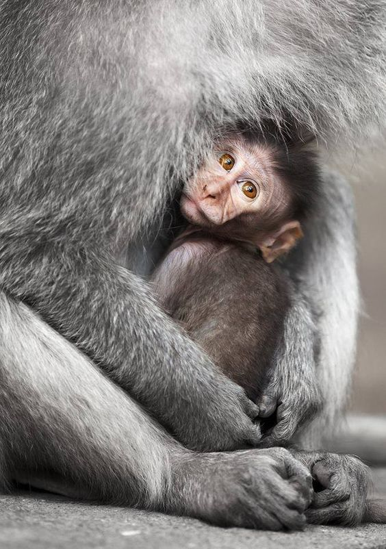 La compassione per gli animali è intimamente associata con la bontà di carattere, e si può tranquillamente affermare che chi è crudele con gli animali non può essere un uomo buono. _ Arthur Schopenhauer _
