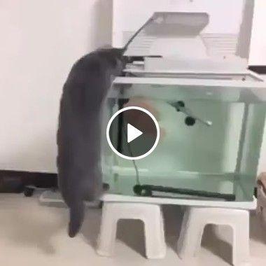 Peixe assusta gato ousado.