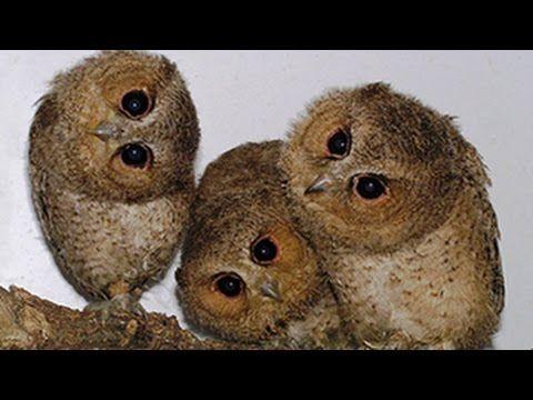 Nette und lustige Eulen und Owlets Compilation 2014 - YouTube
