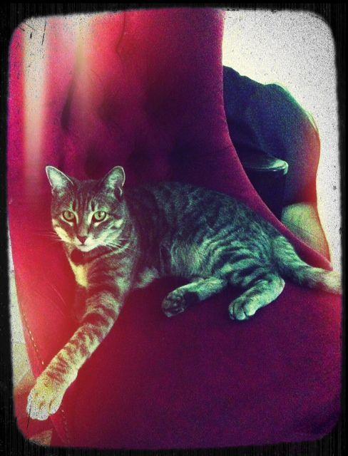 Loki's favorite chair