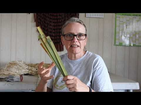 Demonstration Of Extracting Muka Nz Flax Fiber Youtube In 2020 Flax Fiber Flax Plant Fibres