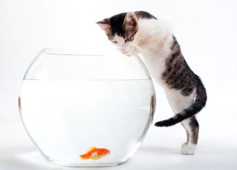 Katzenernährung - die No Go´s I'm Fressnapf  cat