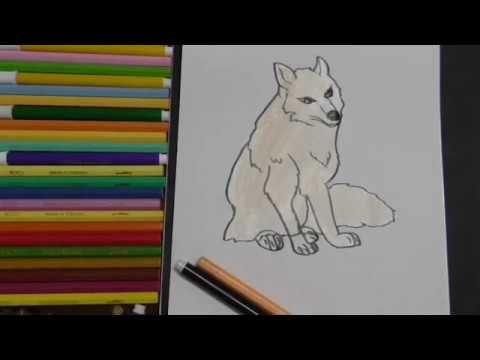 عالم الحيوان 2 Youtube Animal Drawings Animals Draw