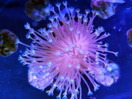 Image result for corals