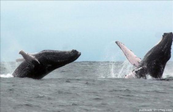 Guardacostas vigilarán avistamiento de ballenas