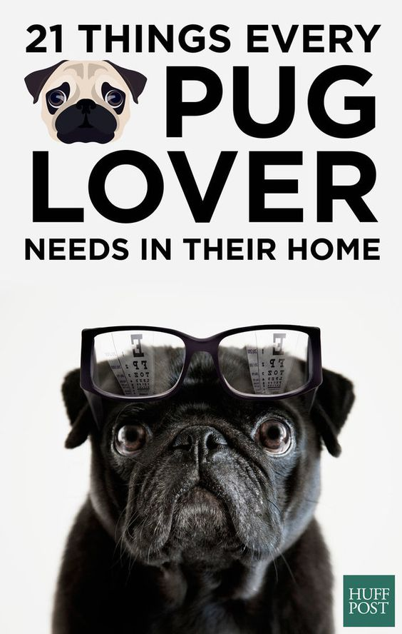 21 things every pug lover desperately needs in their home for Every dog needs a home