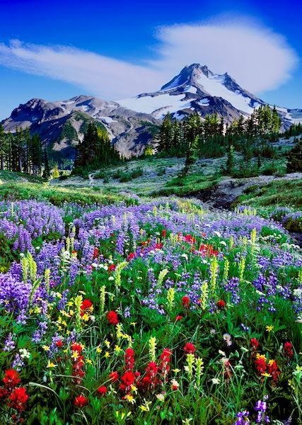 Mount Jefferson Wilderness Area.  One of my favorite hikes in the Bend, Oregon area.  I may never find wildflowers this good again, but at least I saw them once!