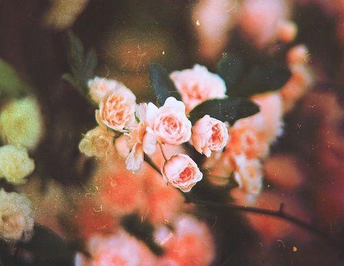 A Floral Dream