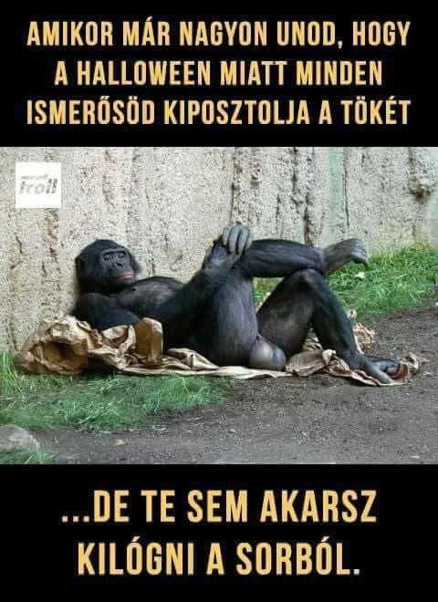 humoros idézetek képekkel Vicces képek #humor #vicces #vicceskep #vicceskepek #humoros #vicc
