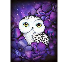 Snowy Owl Fotodruck