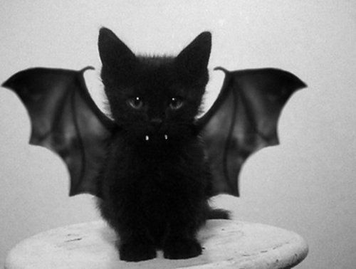 bat, black and white, cat, cute, kitten - inspiring picture on ...