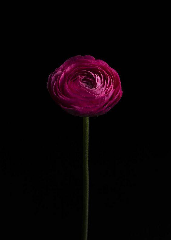 noriaki maeda  Striking flower