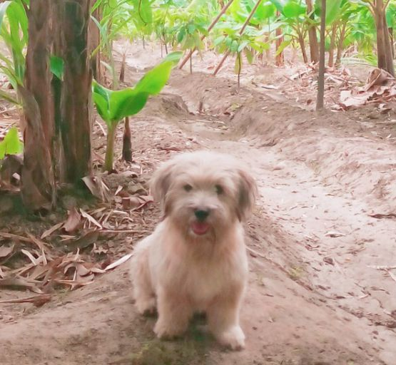 Perrito Blanco Bonito Dogs Animals