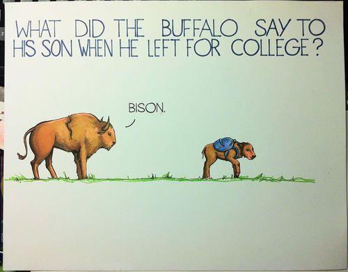 Bison!