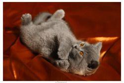 magical-meow:    Ahundov Samed