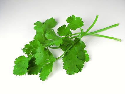 Cilantro Haters, It's Not Your Fault You Hate One of The Best Phytonutrient Dense Herbs In The World