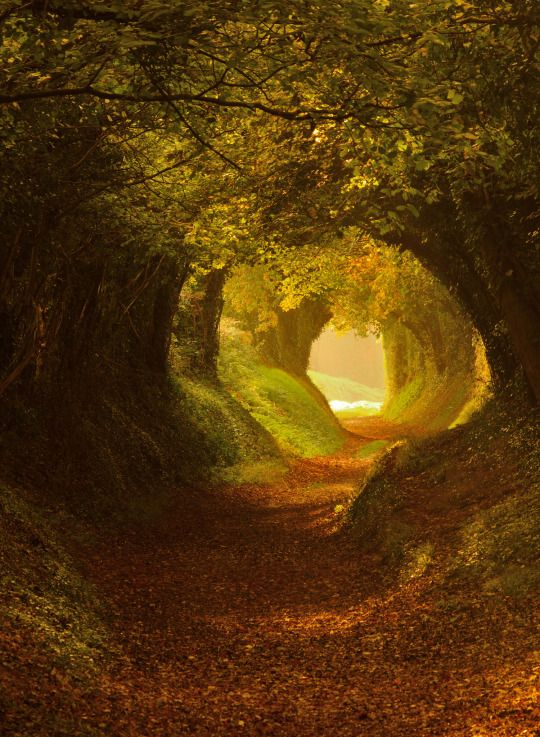 Fairytale Forest Path at Chichester, Sussex, England by Oliver Andreas Jones