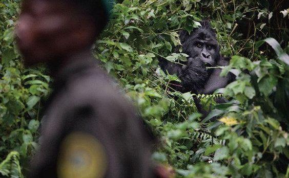 Miliciano passa no parque nacional na República Democrática do Congo
