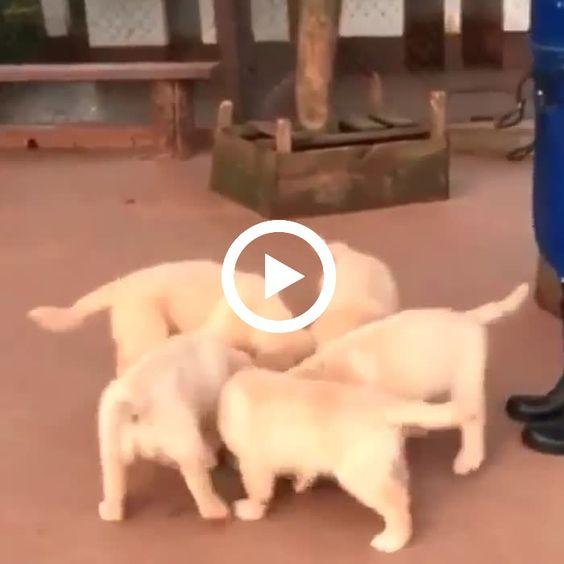 Essa turma de cães muito famintos