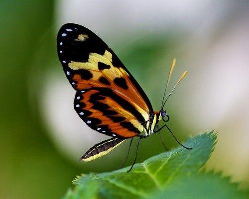 Pin Von Christine Potocar Auf Butterflies Moths Schmetterling