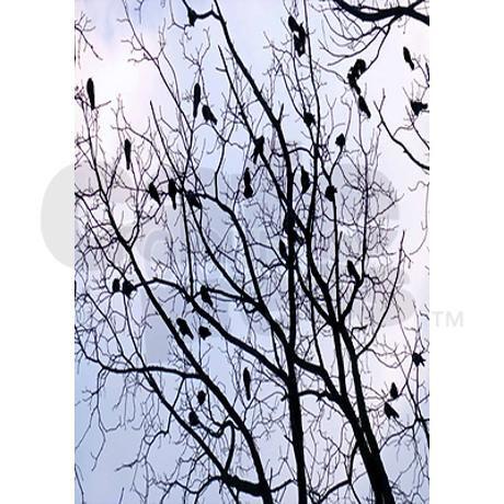 Curtains Ideas curtains birds theme : Sheer curtain panels, Black bird and Sheer curtains on Pinterest