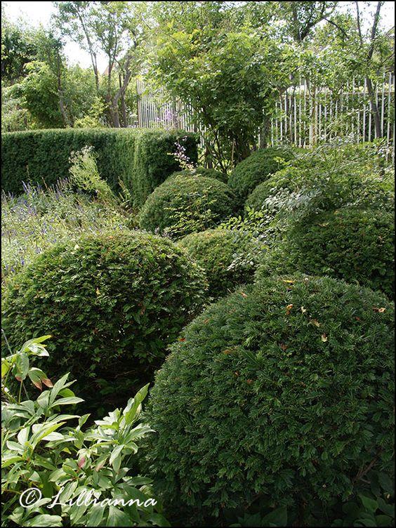 Trädgård trädgård damm : TrädgÃ¥rd, damm, trädgÃ¥rdsdamm, rosor, trädgÃ¥rdsresor, perenner ...