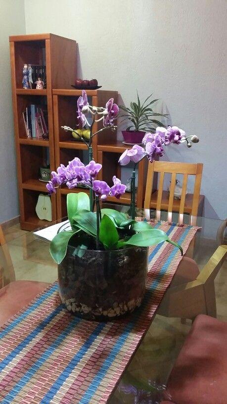 Orquideas combinadas