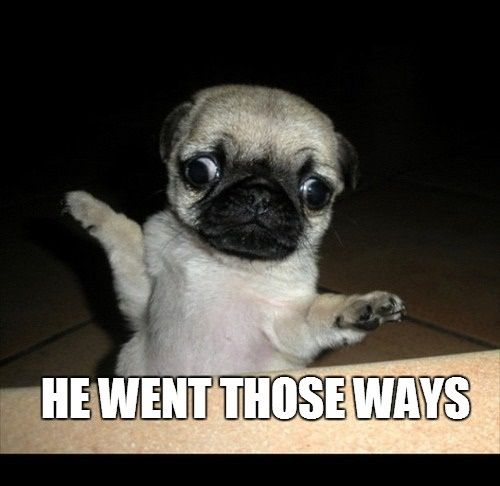 Funny Animals Memes Clean Pugs Funny
