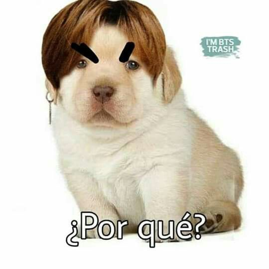 Pin By Ariana Morales On Bts Memes Funny Dogs Funny