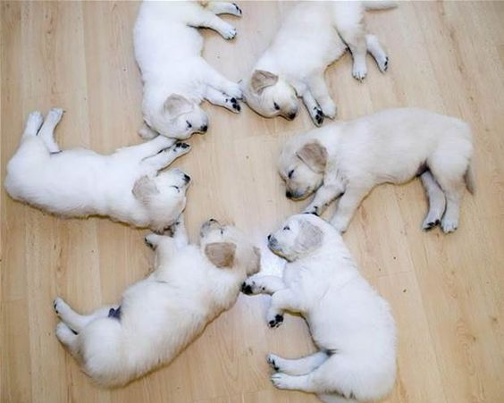 funny puppies pictures - Bing Images