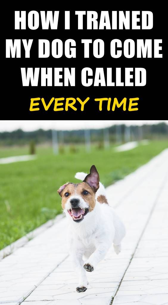 Does Your Dog Come Every Time When Called Find Out How To Get
