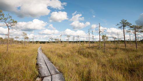 Die Landschaft in Põlva im Stiefel von Saatse