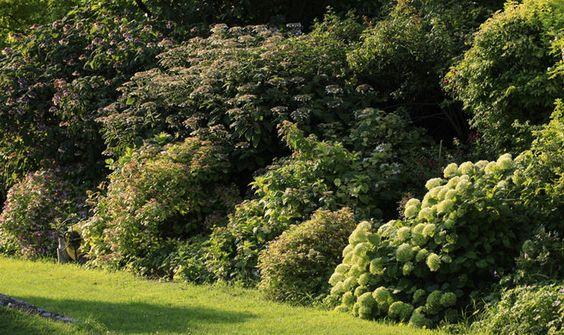 variez les plaisirs en plantant une haie vive et en m langeant arbustes au feuillage persistant. Black Bedroom Furniture Sets. Home Design Ideas