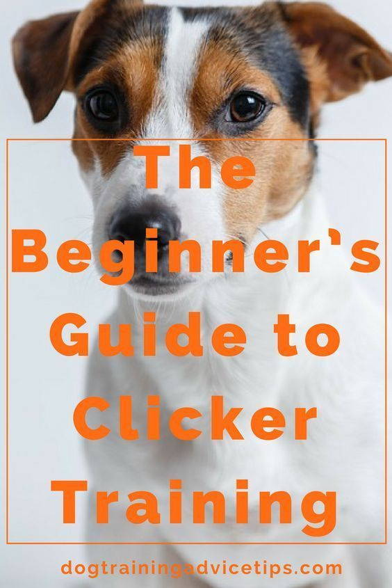 Clicker Training Is One Of The Quickest Ways To Train Your Dog