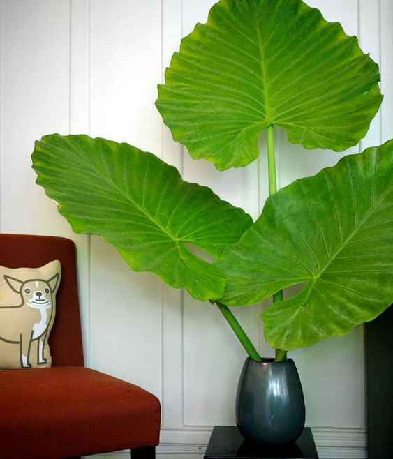 Use Giant Leaves Instead of Flowers in Displays