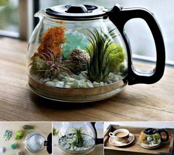 fabriquer un terrarium dans une cafetière, terrarium tropical pour ...
