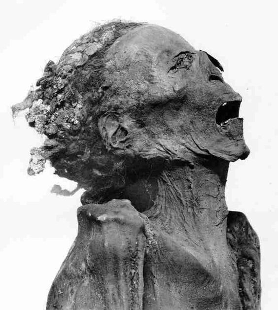 "The anonymous ""screaming"" mummy, found in a sarcophagus devoid of all the symbolic ""protections"" used by the Egyptians to allow the passage of the deceased in the underworld. The face contorted in a grimace of agony and the contract abdomen suggest the action of a poison. Some believe it is the mummy of prince Pentewere, the son of Ramses III who conspired against his father. For sure, the mummification was carried out in a quick, almost with a vindictive desire"
