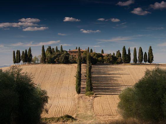 Mittelmeer-Zypressen (Cypressus sempervirens) in ihrer Optimalform. Für Mitteleuropa zumindest als Idealbild des mediterranen Gartens bedeutsam. Foto mit freundlicher Unterstützung von Anton Sulsky auf Unsplash.