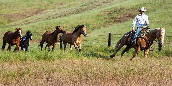 You can drive sales, but you can only take profits to the bank Tony Pace  A cowboy leads the horses in. Triple D Game Farm. Why it Works: All the horses form a line, directing the eye to the rider.