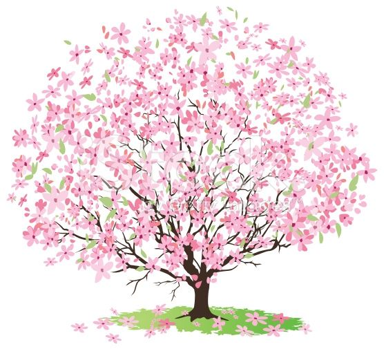 We Understand Every Ones Opinions Cherry Blossom Clipart Will Be Different From One Another Simil Cherry Blossom Clip Art Pink Blossom Tree Cherry Blossom Tree