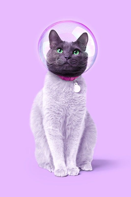 Space Cat Paul Fuentes Photographie D Art Galerie Sakura Chat Espace Illustration De Chat Pop Art Affiches