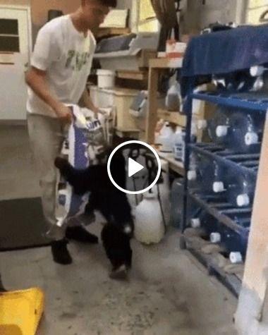Macaco ajudante que não larga seu dono