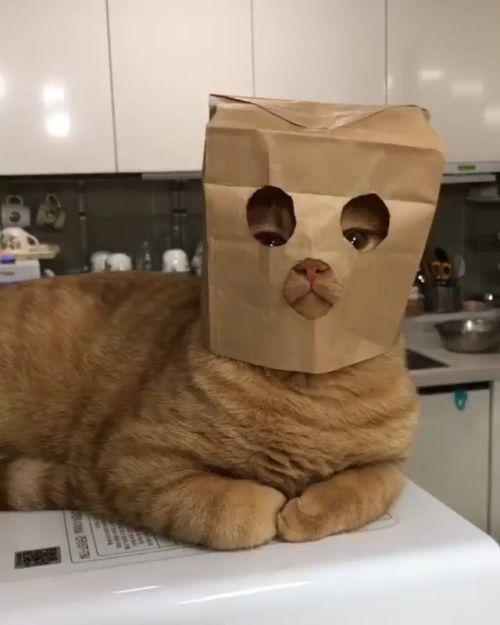 Pin Oleh Different Type Of Cats Di Funny Cats Dengan Gambar
