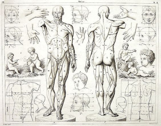 Image detail for -Artist-Reference » Anatomy for Artists