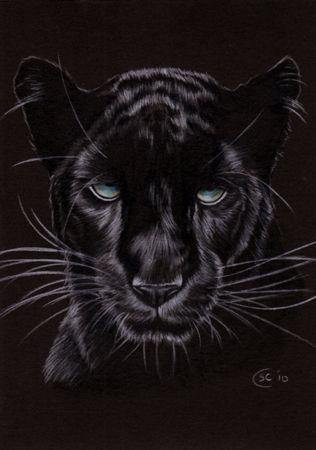 Black Panther 14 Jaguar Big Cat Pencil Painting Sandrine Curtiss Art ...
