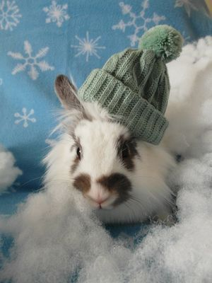 bunny wearing green hat