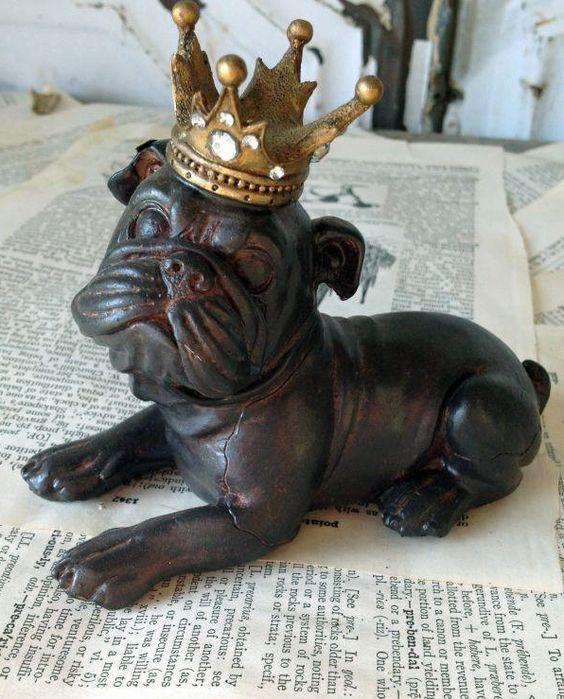 Crowned Bulldog