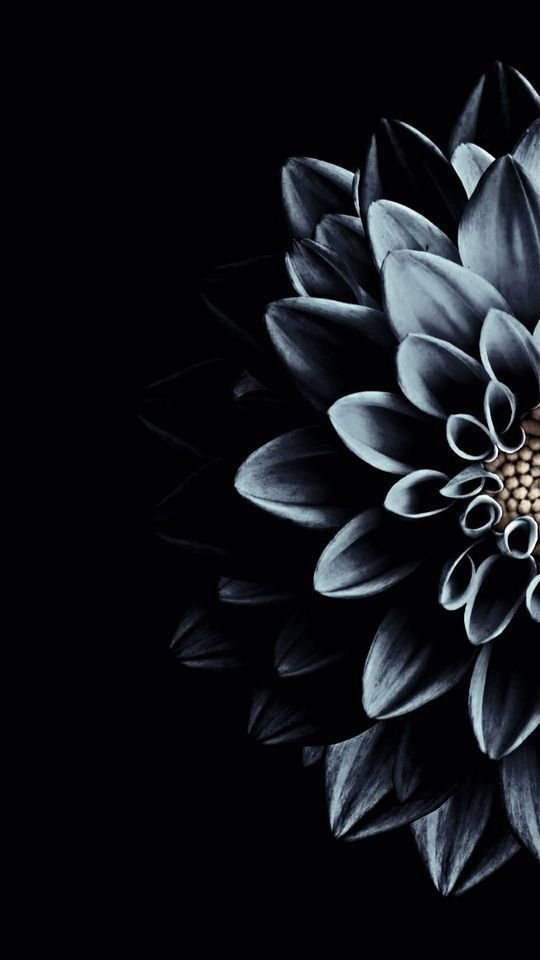 Black Theme Wallpapers Iphone Android Wallpaper Tumblr Lockscreen Flower Lockscreen Dark Flowers