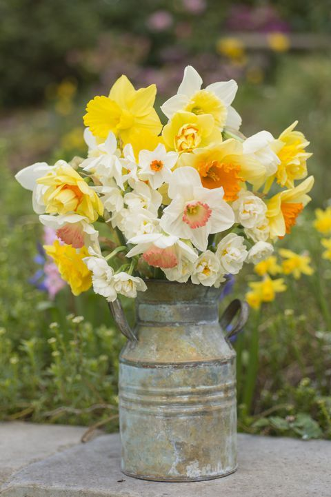 The Meaning Behind Popular Valentine S Day Flowers Daffodil Flower Flower Meanings Daffodil Gardening